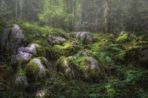 ...Troll Forest...