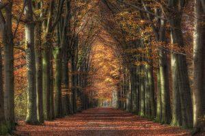 ...Autumn...